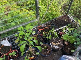 More plants getting ready for potting on